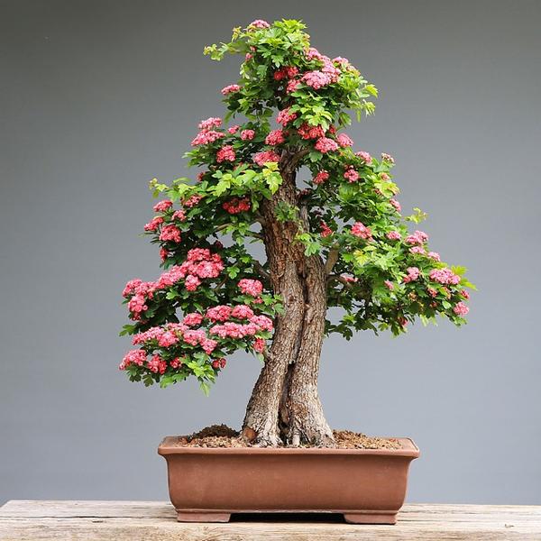 Concime per bonsai pacco piccolo